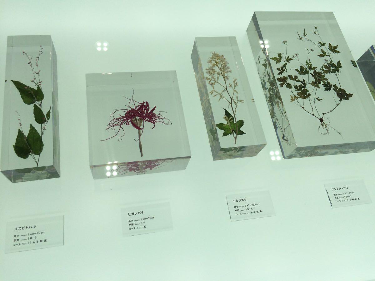 高尾山599ミュージアム植物